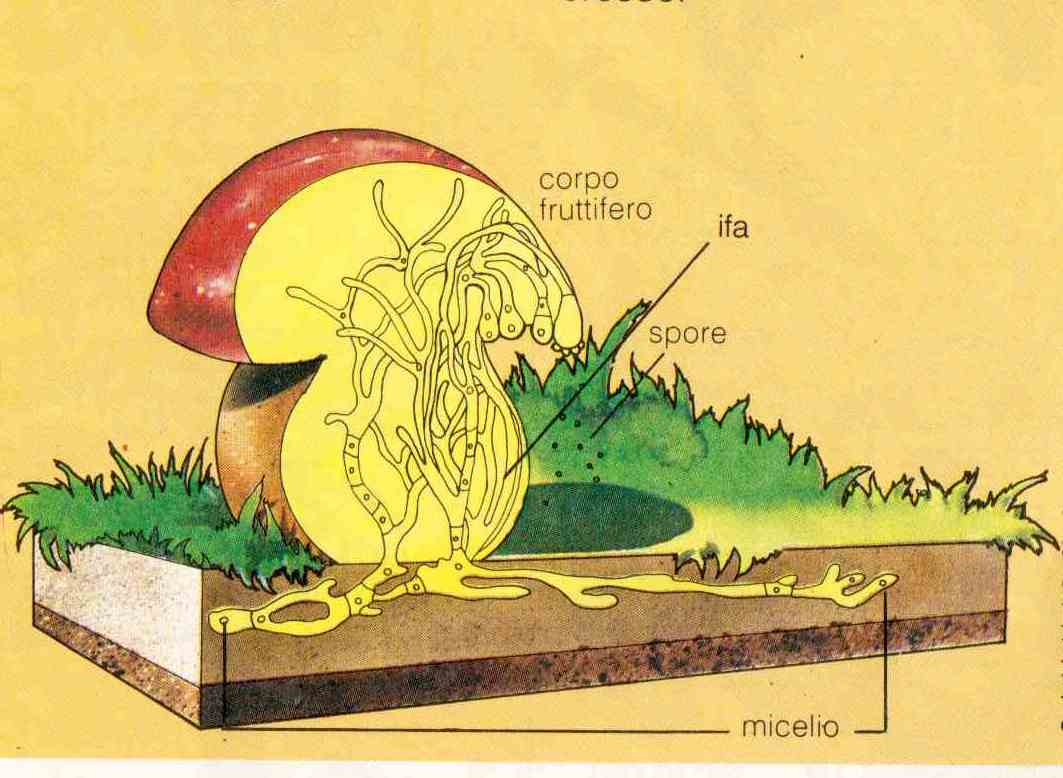 Trattamento di un fungo di piedi di gambe